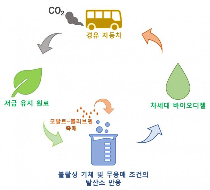 코발트-몰리브덴 촉매의 탈산소 반응을 통한 차세대 바이오디젤 생산 개념도. -사진 제공 한국연구재단