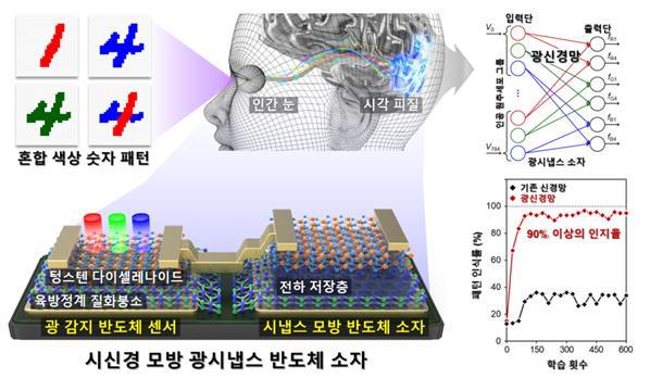 시냅스 모방 반도체 소자와 광 반도체 센서를 결합시켜 다양한 색상에 따라 다른 시냅스 특성을 보이는 한 단계 진보된 시신경 모방 광시냅스 소자를 만들었다. -사진 제공 한국연구재단