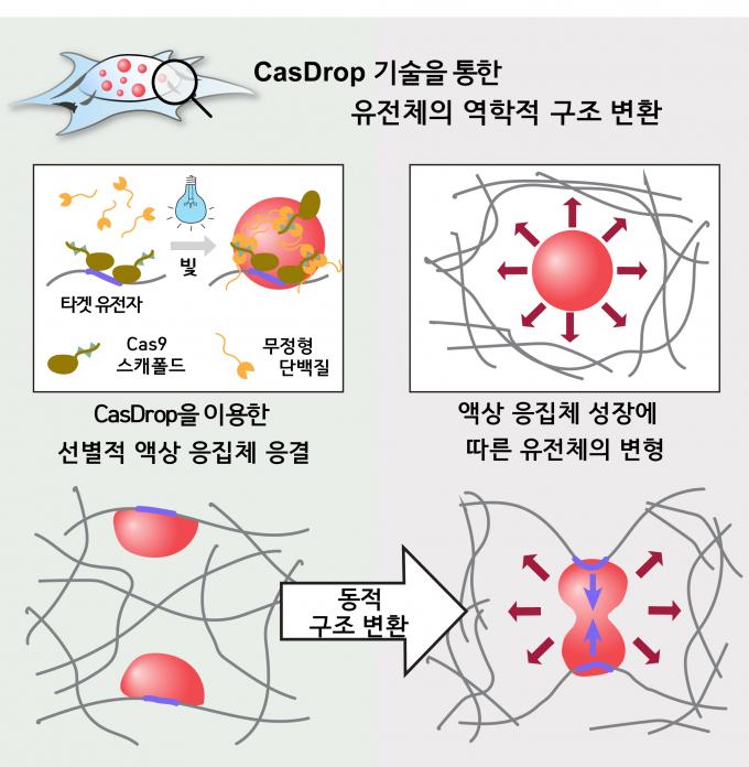 캐스드롭 기술의 개념도(왼쪽 위)와 액체상 응집체와 유전체의 역학적 상호작용을 나타낸 그림. - 사진 제공 서울대 공대