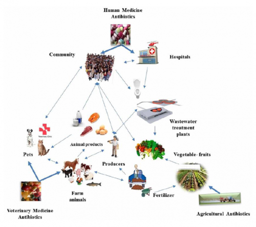 세균은 모든 곳에 퍼져있으며, 끊임없이 새로운 형질을 획득하고 있다. 이에 전 지구 생명체의 건강을 위한 ′원헬스′ 개념이 등장해 슈퍼박테리아 연구가 진행되고 있다.-이혁민 고려대 교수