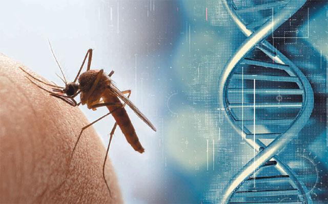 겨울인 지금은 여름 모기의 성가심을 잊는다. 하지만 지금도 지구 곳곳에서는 '감염병 매개체' 모기와 목숨을 건 사투를 벌이고 있다. 생명공학 기술이 여기에 뛰어들고 있다. 게티이미지뱅크·사진 출처 프리픽
