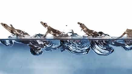 도마뱀붙이는 물 위에서도 달린다