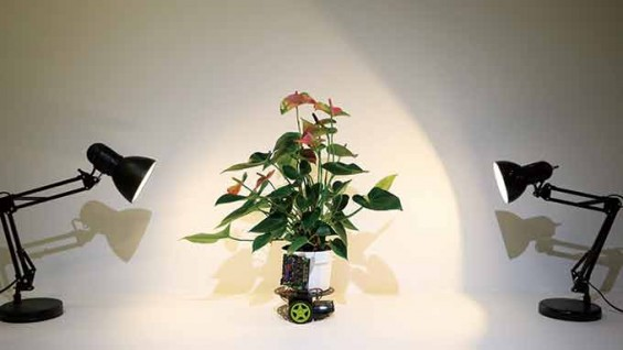 스스로 움직이는 식물 '엘로완'