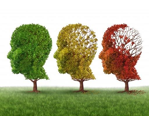 """""""곰팡이에 감염된 뇌, 치매 걸릴 가능성 있다"""""""