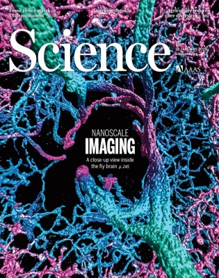 [표지로 읽는 과학] 초파리 뇌 속 깊은 곳까지 분자 단위로 본다