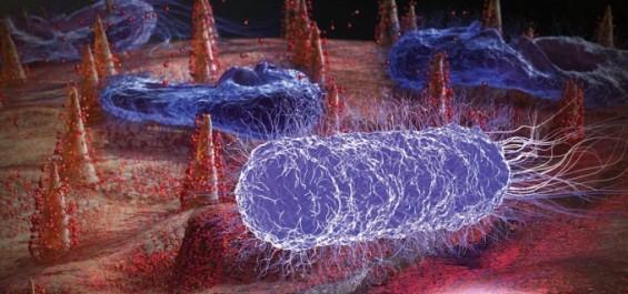해조류에게 배운다…세균까지 차단하는 신개념 오염방지막 개발