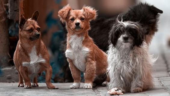 [애니멀리포트] 신뢰받던 동물보호단체의 안락사 논란