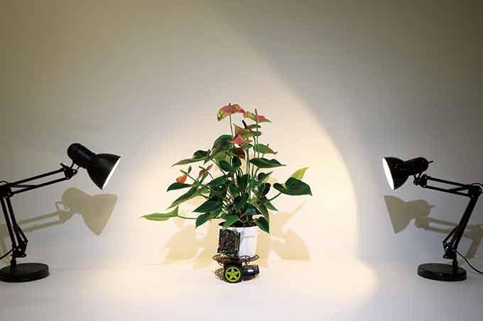 빛의 변화를 감지해 스스로 움직이는 식물 ′엘로완′. Harpreet Sareen