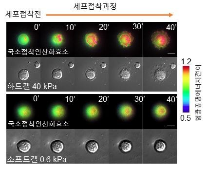 세포막에서의 국소접착인산화효소 고해상도 실시간 이미지. 한국연구재단 제공.