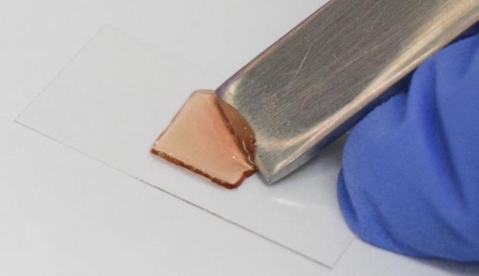 연구팀이 제작한 인공혈관 조직을 떼어내는 모습. 강병준 제공