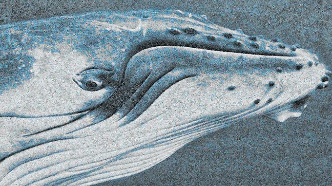 5만 개의 플라스틱 봉투로 만든 고래 그림. 이는 바다 2.6km²에 떠 있는 플라스틱 쓰레기의 수와 같다. Chris Jordan