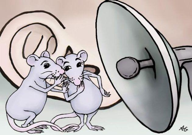 쥐와 같은 설치류는 초음파를 통해 사회적 대화를 나눈다. 약 20가지의 초음파 발성 레파토리를 가지고 아주 풍부한 대화를 나눈다. 이 대화를 분석한다면 다양한 연구에 적용될 수 있다.-미국워싱턴대학교 제공