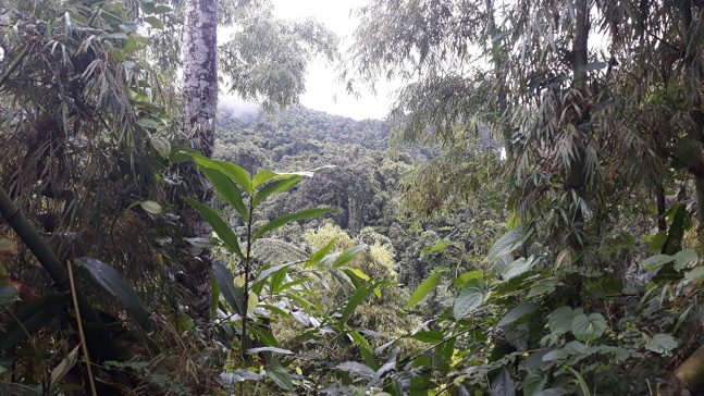 마다가스카르 마조제지 국립공원의 원시림. 마다가스카르에 사는 동식물 상당수는 오직 마다가스카르에서만 발견된다. 박한선 제공