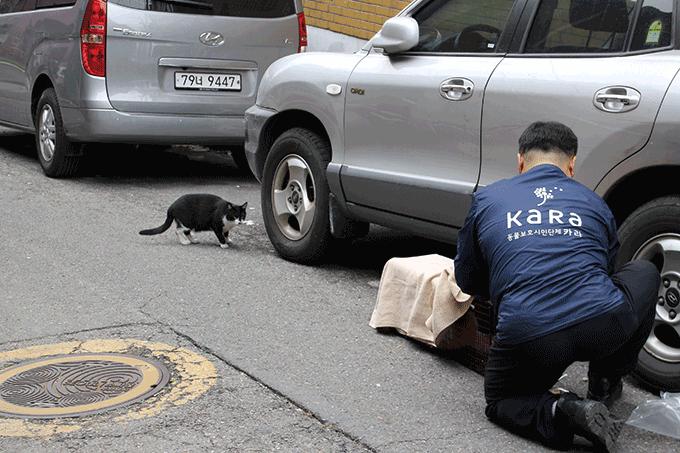 중성화 수술을 위해 길고양이를 포획하고 있다. 동물권행동 카라