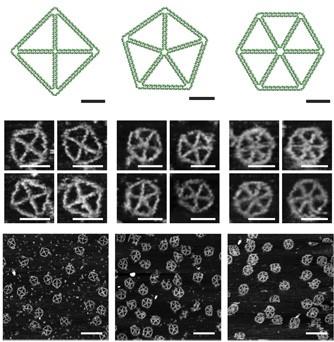 프로그램으로 설계한 DNA의 모습(위)와 합성해 만든 DNA 나노구조체의 모습 -사이언스 어드밴스 제공