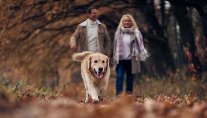 개는 계통분류학의 관점에서는 침팬지보다 훨씬 먼 친척이지만 심신의 건강을 위해 상당량의 운동이 필요한 생리를 지니고 있다는 점에서는 우리와 가깝다. 매일 개를 산책시키는 정성으로 우리 몸도 챙긴다면 대사질환에 걸릴 위험성이 크게 낮아질 것이다. 게티이미지뱅크