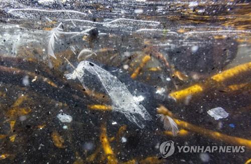 英 해안 밀려온 해양 포유류 내장서 예외없이 미세플라스틱 검출