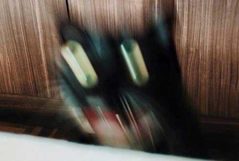 심령사진? '광속 고양이' 화제
