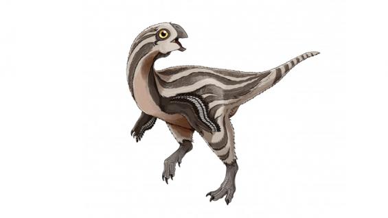 국내 연구팀, 몽골에서 아기 신종 공룡 '고비랍토르' 발견