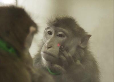 [강석기의 과학카페] 동물이 거울을 본다는 것의 의미