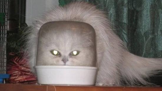 악몽에 나올 고양이