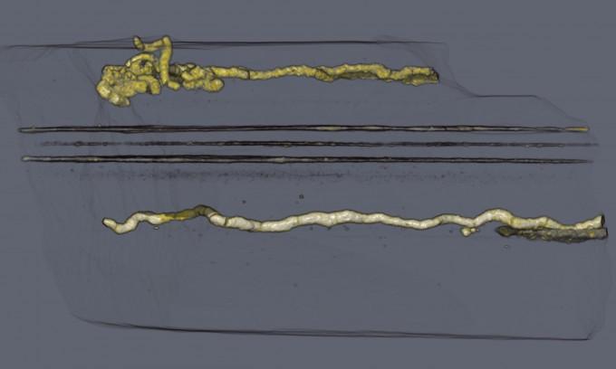 화석 속 생멸은 긴 실 모양의황화철 구조를 갖고 있으며, 굵기가 최대 0.6㎝, 길이가 최대 17㎝였다. PNAS 제공