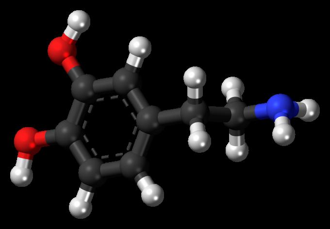 도파민의 분자구조. PNAS 제공