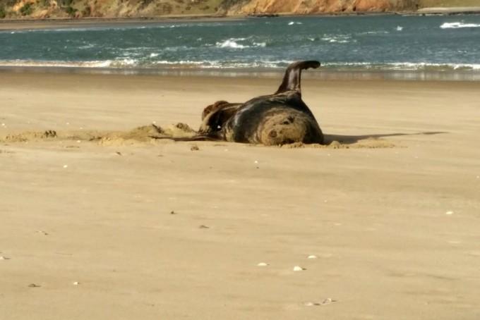 뉴질랜드 남쪽 지역의 오레티 해변에서 수집한 레오파드 바다표범의 배설물에서 USB 메모리가 발견됐다. 해당 USB 메모리엔 2017년의 추억이 담겨있었다. 이 USB 메모리를 발견한 크리스타 허프먼 연구원은 주인에게 되찾아주고 싶어한다. 뉴질랜드 국립해양연구소 제공