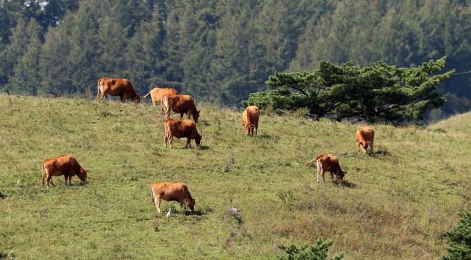 기후변화 대응 토론회에서는 가축의 소화를 도와 메탄을 줄이는 방법 등 다양한 전문가들의 아이디어가 쏟아졌다. 연합뉴스