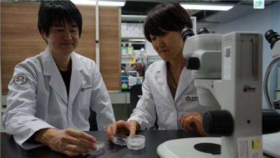 퇴행성 뇌질환 치료하는 신경세포 대량 생산 기술 개발