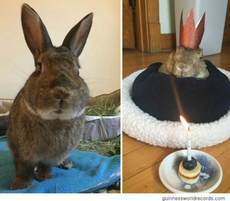 세상에서 가장 나이가 많은 토끼