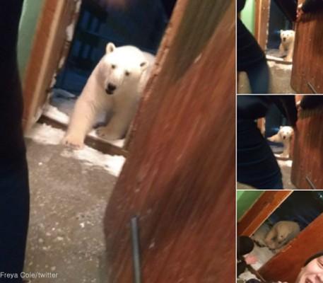 집 안에 들어오는 북극곰