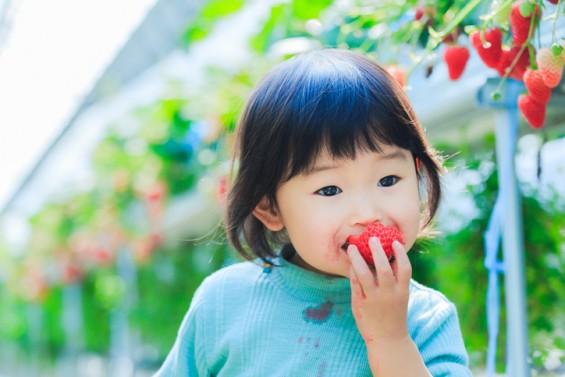 딸기가 지구를 한 바퀴 돈 사연