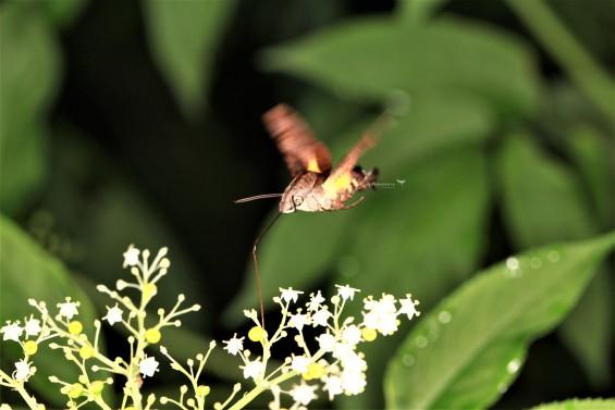 [이강운의 곤충記] 곤충의 속도 경쟁