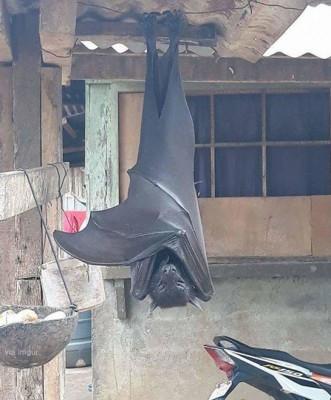 뒷마당에 나타난 배트맨