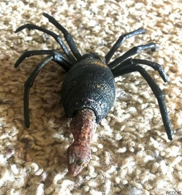 """""""거미 다리를 가진 도마뱀""""깜짝"""