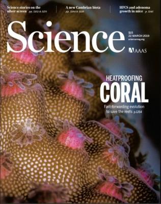 [표지로 읽는 과학] 인간이 만든 잡종으로 산호 멸종 막는다.