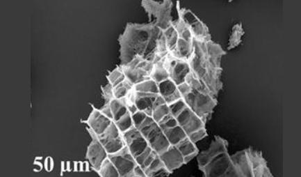 포스텍 연구팀 리튬·황배터리 성능 향상 전극 개발