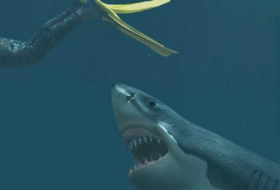 [애니멀리포트] 상어 가족은 엄마가 힘이 세다
