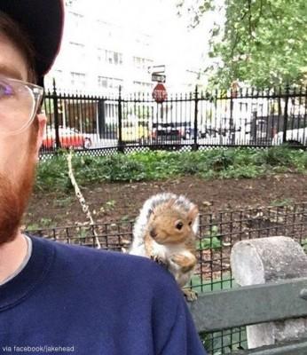 사람에게 말 거는 뉴욕다람쥐