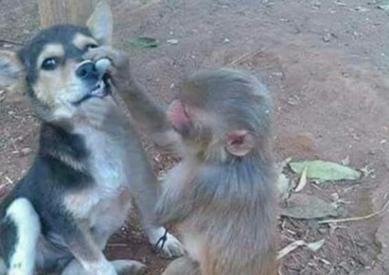 치과 공부를 한 원숭이