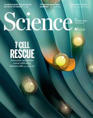 [표지로 읽는 과학] 고농도 칼륨에 젖은 T세포, 암 잡는 희망 되다