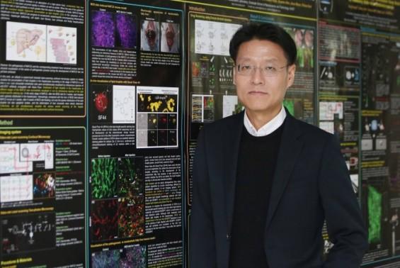 3D생체현미경으로 패혈증 폐 손상 원리 밝힌다