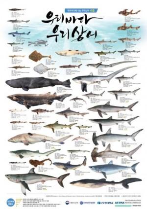 한국에도 47종의 상어가 살고 있으며, 그중 12종이 IUCN 지정 ′멸종위기종′과 ′멸종취약종′이다. 부경대 해양어류자원 기탁등록보존기관은 2017년 이같은 내용을 담은 포스터 ′우리바다,우리상어′를 만들었다.