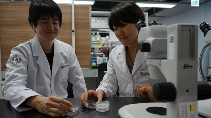 고소도 요이치 한국뇌연구원 책임연구원(왼쪽)과 이와시타 미사토 연구원이 열대어 콜라겐 젤 샘플을 관찰하고 있다. 사진제공 한국뇌연구원