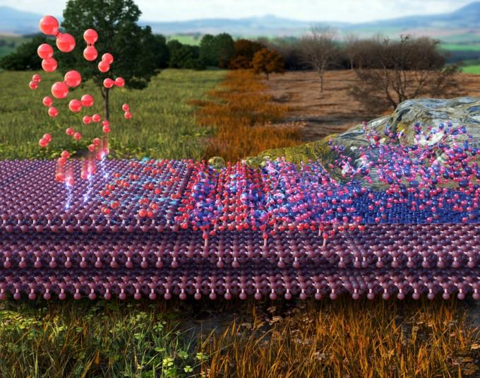 산소(붉은색)가 흑린 표면에 흡착된 후 전자가 이동되어 산화가 일어나고 그와 동시에 수분이 흡착되어 성능저하가 발생하는 흑린의 표면 변화과정(좌→우). 한국연구재단 제공