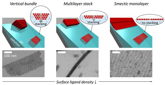나노막대 표면을 감싸고 있는 리간드 층 밀도에 따른 자기조립구조 모식도와 전자현미경 이미지. KAIST 제공