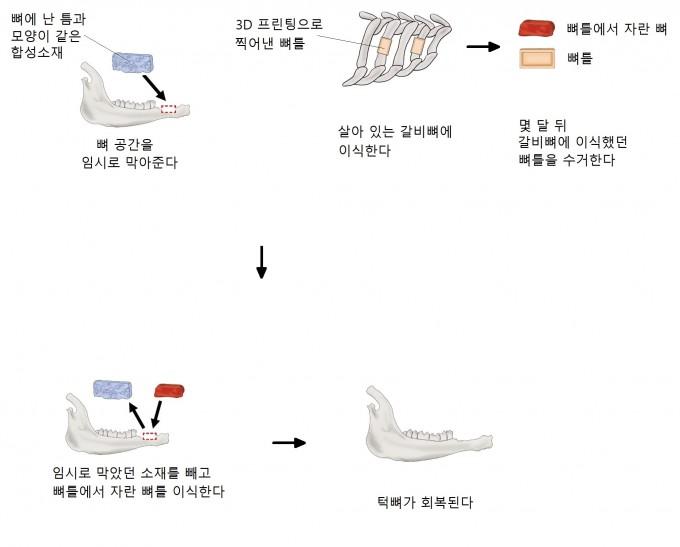 연구팀의 실험 과정. PNAS 제공.