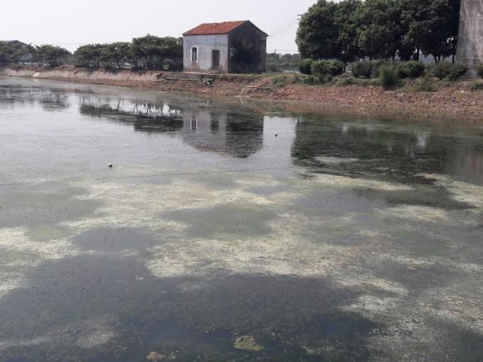 중국 장쑤성 타이 호수 인근의 민물게 양식장. 최근 과학자들은 이런 양식장이 기후변화에 미치는 영향이 크다고 경고했다. 사진 제공 강호정 교수