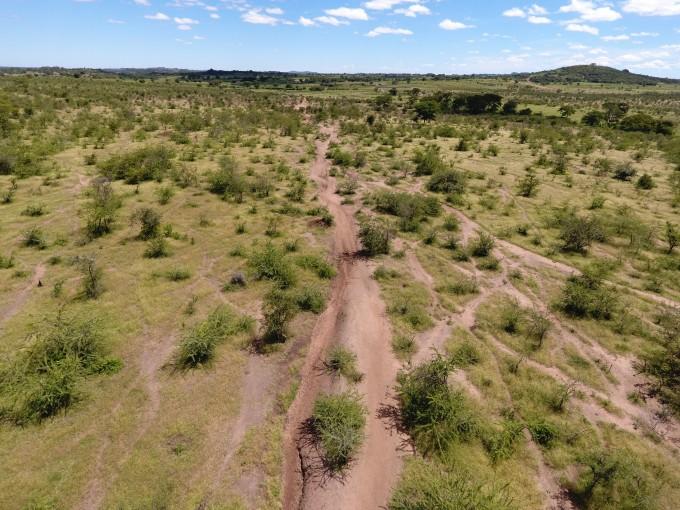 세렝게티 국립공원 주변지역에서 가축이 이동하며 이룬 길이 초원을 파괴한 모습이다. 야생동물은 이런 환경에서 최대한 멀리 떨어져 움직이는 것으로 나타났다. 사진 제공 미첼 벨두이스